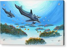 Dolphen Moves Acrylic Print