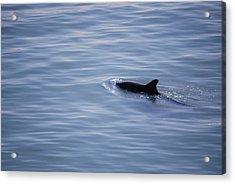#lifemovesalonglikewater Acrylic Print