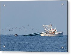 Dolphin Chase Acrylic Print