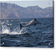 Acrylic Print featuring the photograph Dolphin Dance by Kandy Hurley