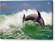 Dolphin Flip Acrylic Print by Kara  Stewart