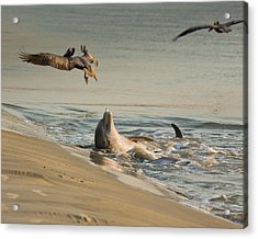 Dolphin Joy Acrylic Print