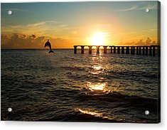 Dolphin Jumping Out Of The Sea In Florida Acrylic Print by Fizzy Image