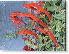 Acrylic Print featuring the photograph Dolphin Plant by Brenda Brown