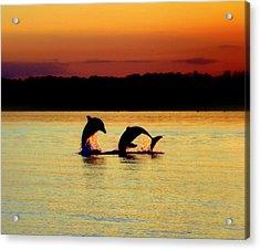Dolphin Serenade Acrylic Print by Karen Wiles