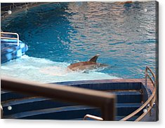 Dolphin Show - National Aquarium In Baltimore Md - 1212103 Acrylic Print by DC Photographer