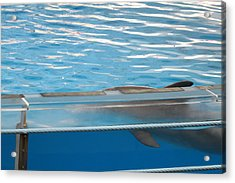 Dolphin Show - National Aquarium In Baltimore Md - 121211 Acrylic Print