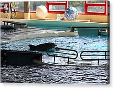 Dolphin Show - National Aquarium In Baltimore Md - 1212110 Acrylic Print by DC Photographer