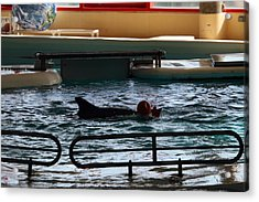 Dolphin Show - National Aquarium In Baltimore Md - 1212111 Acrylic Print by DC Photographer