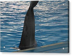 Dolphin Show - National Aquarium In Baltimore Md - 1212126 Acrylic Print