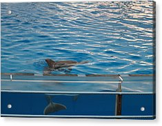 Dolphin Show - National Aquarium In Baltimore Md - 121216 Acrylic Print by DC Photographer