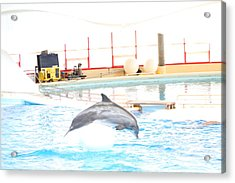 Dolphin Show - National Aquarium In Baltimore Md - 1212165 Acrylic Print