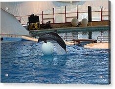 Dolphin Show - National Aquarium In Baltimore Md - 1212170 Acrylic Print by DC Photographer