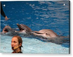 Dolphin Show - National Aquarium In Baltimore Md - 1212177 Acrylic Print by DC Photographer