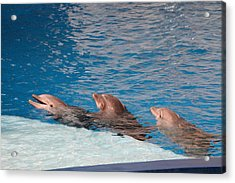 Dolphin Show - National Aquarium In Baltimore Md - 1212183 Acrylic Print by DC Photographer