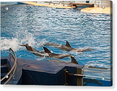 Dolphin Show - National Aquarium In Baltimore Md - 1212187 Acrylic Print by DC Photographer