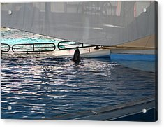 Dolphin Show - National Aquarium In Baltimore Md - 121219 Acrylic Print by DC Photographer