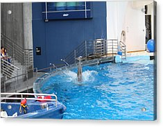 Dolphin Show - National Aquarium In Baltimore Md - 1212204 Acrylic Print by DC Photographer