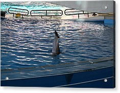 Dolphin Show - National Aquarium In Baltimore Md - 121222 Acrylic Print by DC Photographer