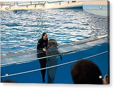 Dolphin Show - National Aquarium In Baltimore Md - 1212229 Acrylic Print