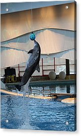 Dolphin Show - National Aquarium In Baltimore Md - 1212234 Acrylic Print by DC Photographer