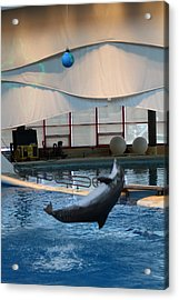 Dolphin Show - National Aquarium In Baltimore Md - 1212239 Acrylic Print by DC Photographer