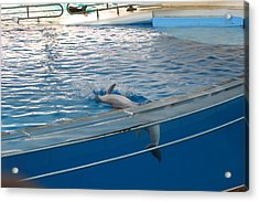 Dolphin Show - National Aquarium In Baltimore Md - 121224 Acrylic Print by DC Photographer