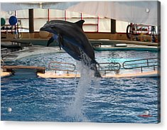 Dolphin Show - National Aquarium In Baltimore Md - 1212248 Acrylic Print by DC Photographer