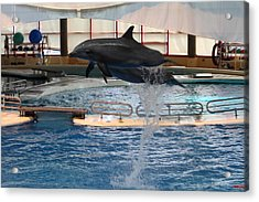 Dolphin Show - National Aquarium In Baltimore Md - 1212249 Acrylic Print by DC Photographer