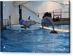 Dolphin Show - National Aquarium In Baltimore Md - 1212258 Acrylic Print by DC Photographer
