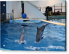 Dolphin Show - National Aquarium In Baltimore Md - 1212261 Acrylic Print