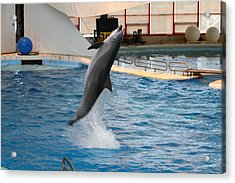 Dolphin Show - National Aquarium In Baltimore Md - 1212263 Acrylic Print by DC Photographer