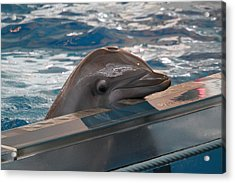 Dolphin Show - National Aquarium In Baltimore Md - 1212279 Acrylic Print by DC Photographer