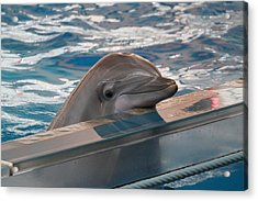 Dolphin Show - National Aquarium In Baltimore Md - 1212281 Acrylic Print by DC Photographer