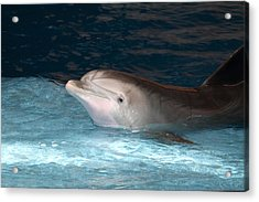 Dolphin Show - National Aquarium In Baltimore Md - 121232 Acrylic Print
