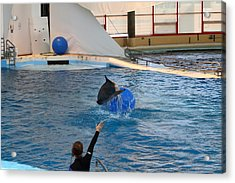 Dolphin Show - National Aquarium In Baltimore Md - 121241 Acrylic Print by DC Photographer