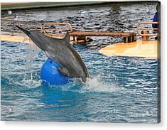 Dolphin Show - National Aquarium In Baltimore Md - 121242 Acrylic Print by DC Photographer