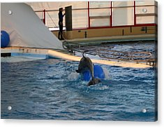 Dolphin Show - National Aquarium In Baltimore Md - 121243 Acrylic Print by DC Photographer