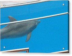 Dolphin Show - National Aquarium In Baltimore Md - 12125 Acrylic Print by DC Photographer