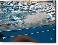 Dolphin Show - National Aquarium In Baltimore Md - 121262 Acrylic Print