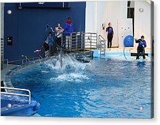 Dolphin Show - National Aquarium In Baltimore Md - 121292 Acrylic Print by DC Photographer
