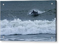 Acrylic Print featuring the photograph Dolphins At Play by Greg Graham