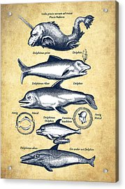 Dolphins - Historiae Naturalis - 1657 - Vintage Acrylic Print