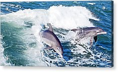 Dolphins Jumping Acrylic Print by Aimee L Maher Photography and Art Visit ALMGallerydotcom