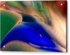 Dolpins Acrylic Print by Omaste Witkowski