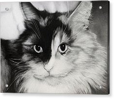 Domestic Cat Acrylic Print by Natasha Denger