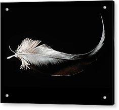 Domiselle Crane Acrylic Print