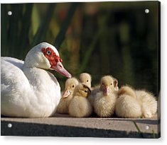 Acrylic Print featuring the photograph Donalds Family by Meir Ezrachi