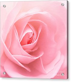 Donation Rose Acrylic Print