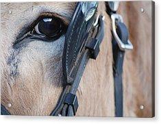Donkey Eye Acrylic Print